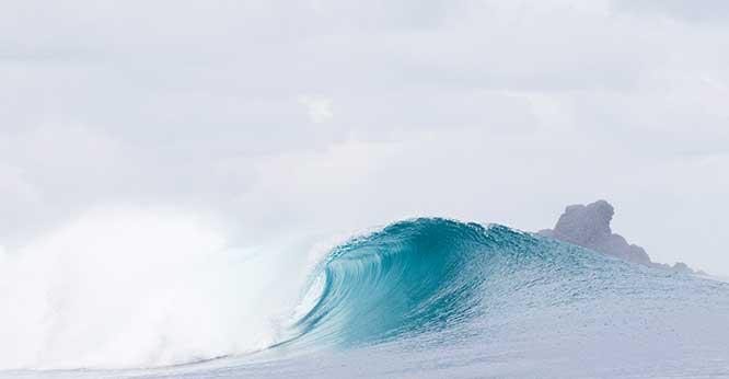 turtles of surf bayank, surf, surf trip,